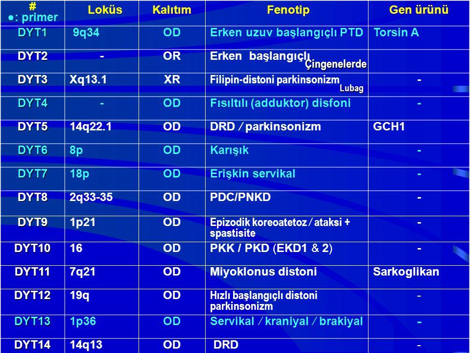 # ●: primer LoküsKalıtım FenotipGen ürünü DYT1 9q34ODErken uzuv başlangıçlı PTDTorsin A DYT2-ORErken başlangıçlı DYT3Xq13.1XR Filipin-distoni parkinso