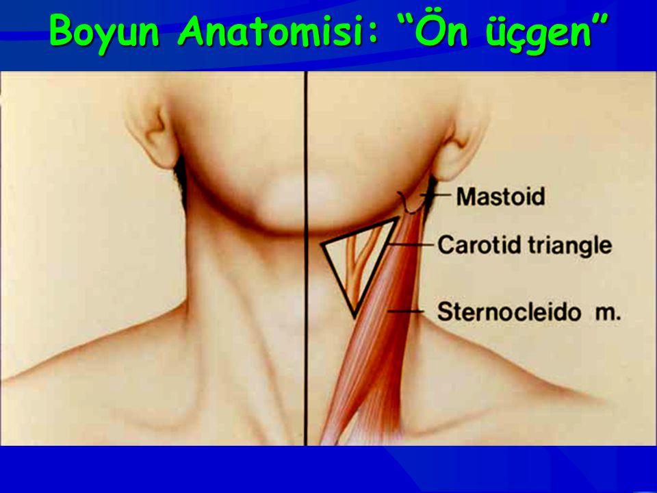 """Boyun Anatomisi:""""Ön üçgen"""" Boyun Anatomisi: """"Ön üçgen"""""""