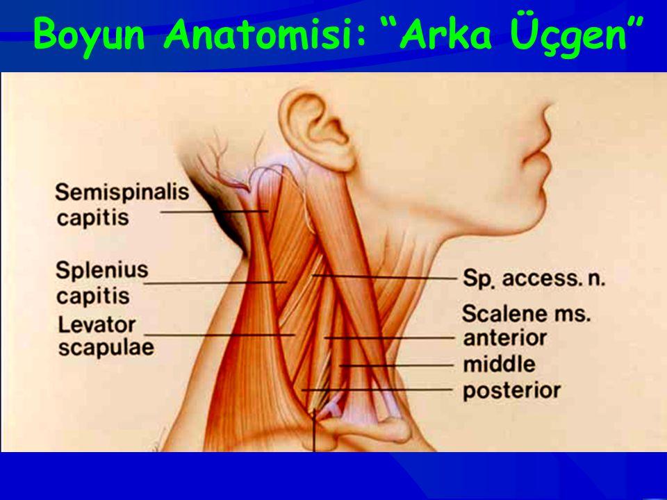 """Boyun Anatomisi: """"Arka Üçgen"""""""