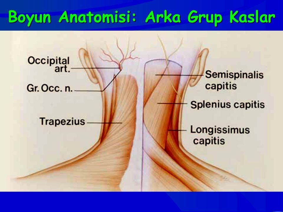 Boyun Anatomisi: Arka Grup Kaslar
