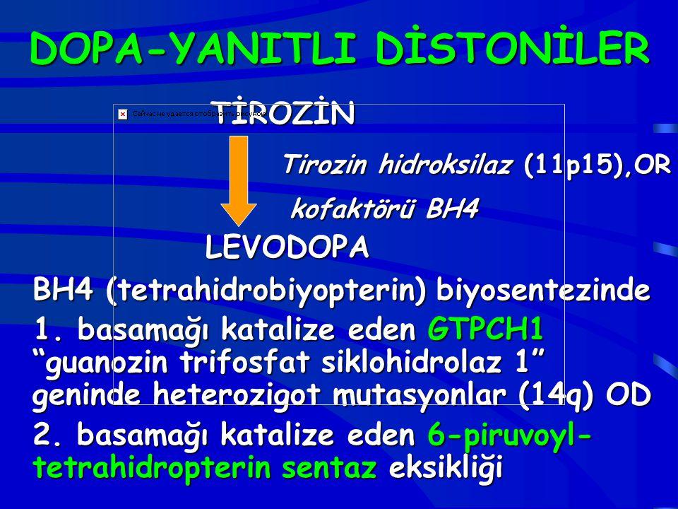 DOPA-YANITLI DİSTONİLER TİROZİN Tirozin hidroksilaz (11p15),OR kofaktörü BH4 LEVODOPA kofaktörü BH4 LEVODOPA BH4 (tetrahidrobiyopterin) biyosentezinde