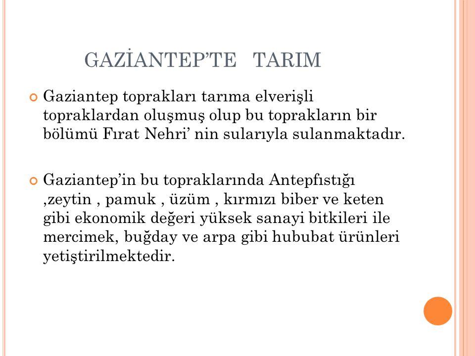 GAZİANTEP'TE TARIM Gaziantep toprakları tarıma elverişli topraklardan oluşmuş olup bu toprakların bir bölümü Fırat Nehri' nin sularıyla sulanmaktadır.