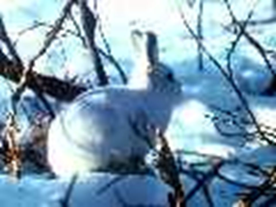 ÖR: Tavşan korkudan hızlı hızlı koşuyordu ÖR.Ormanda tavşan yavruları ile zıp zıp zıplıyor.