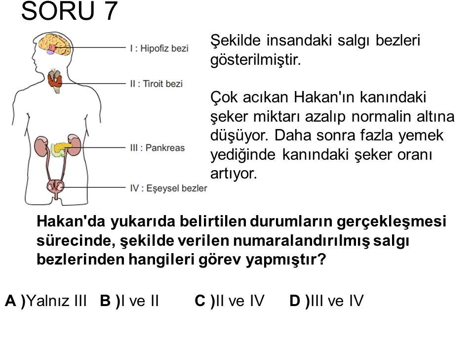 SORU 7 Hakan'da yukarıda belirtilen durumların gerçekleşmesi sürecinde, şekilde verilen numaralandırılmış salgı bezlerinden hangileri görev yapmıştır?
