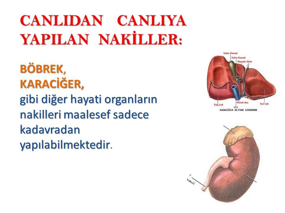 CANLIDAN CANLIYA YAPILAN NAK İ LLER: BÖBREK, KARACİĞER, gibi diğer hayati organların nakilleri maalesef sadece kadavradan yapılabilmektedir gibi diğer