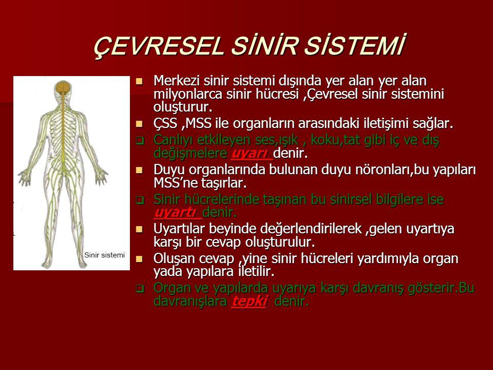 ÇEVRESEL SİNİR SİSTEMİ Merkezi sinir sistemi dışında yer alan yer alan milyonlarca sinir hücresi,Çevresel sinir sistemini oluşturur. Merkezi sinir sis