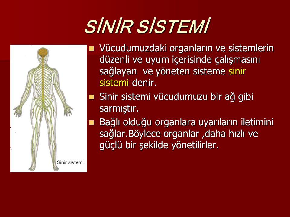 SİNİR SİSTEMİ Vücudumuzdaki organların ve sistemlerin düzenli ve uyum içerisinde çalışmasını sağlayan ve yöneten sisteme sinir sistemi denir. Vücudumu