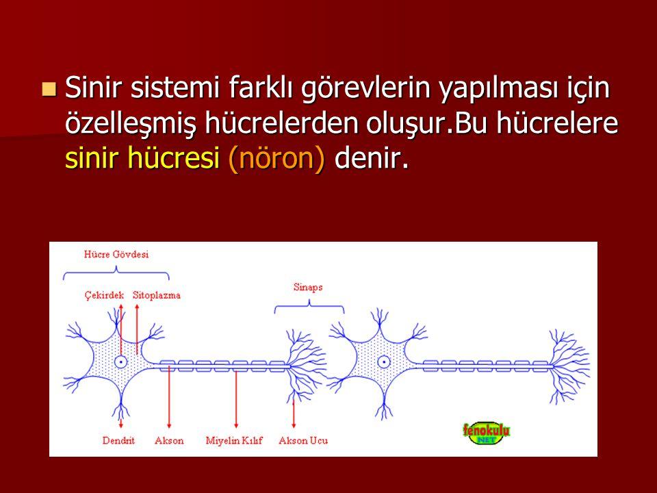 Sinir sistemi farklı görevlerin yapılması için özelleşmiş hücrelerden oluşur.Bu hücrelere sinir hücresi (nöron) denir. Sinir sistemi farklı görevlerin