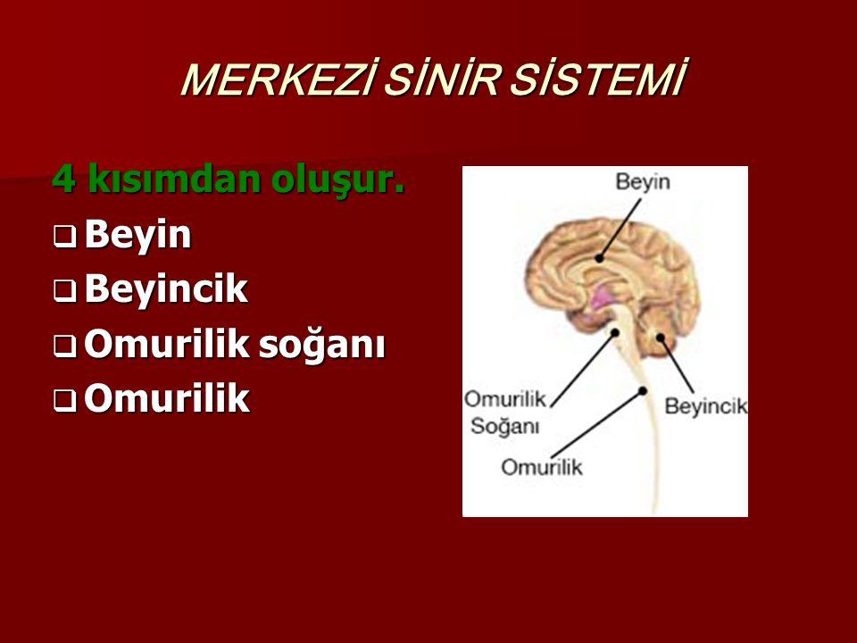 MERKEZİ SİNİR SİSTEMİ 4 kısımdan oluşur.  Beyin  Beyincik  Omurilik soğanı  Omurilik