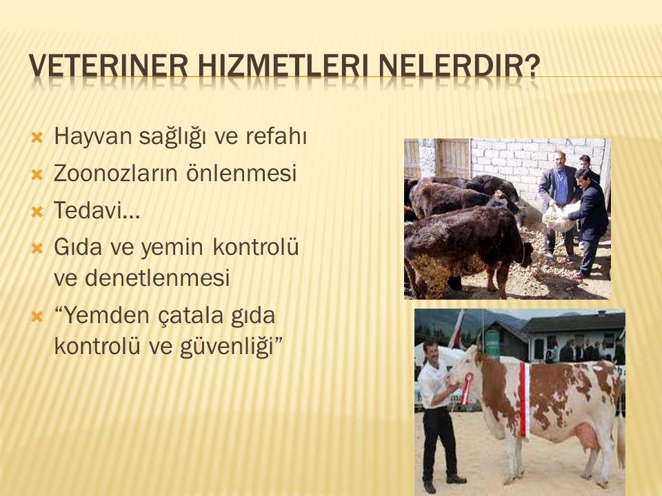  Hayvan sağlığı ve refahı  Zoonozların önlenmesi  Tedavi…  Gıda ve yemin kontrolü ve denetlenmesi  Yemden çatala gıda kontrolü ve güvenliği