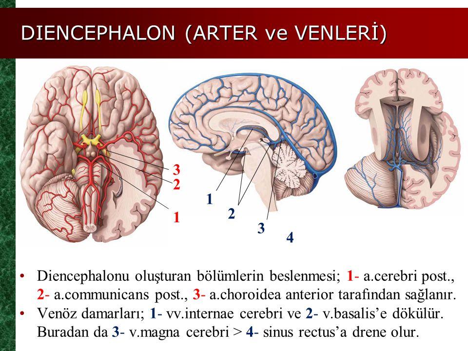 DIENCEPHALON (ARTER ve VENLERİ) Diencephalonu oluşturan bölümlerin beslenmesi; 1- a.cerebri post., 2- a.communicans post., 3- a.choroidea anterior tar