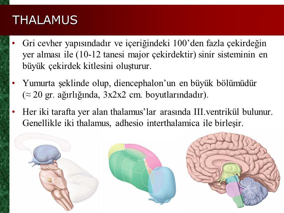 THALAMUS Gri cevher yapısındadır ve içeriğindeki 100'den fazla çekirdeğin yer alması ile (10-12 tanesi major çekirdektir) sinir sisteminin en büyük çe