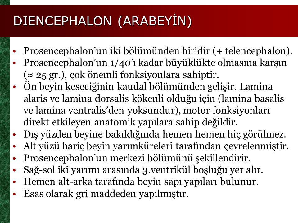 DIENCEPHALON (ARABEYİN) Prosencephalon'un iki bölümünden biridir (+ telencephalon). Prosencephalon'un 1/40'ı kadar büyüklükte olmasına karşın (≈ 25 gr
