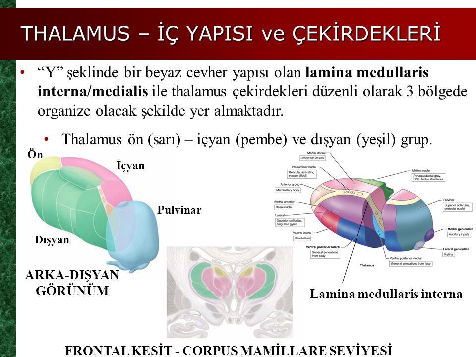 """THALAMUS – İÇ YAPISI ve ÇEKİRDEKLERİ """"Y"""" şeklinde bir beyaz cevher yapısı olan lamina medullaris interna/medialis ile thalamus çekirdekleri düzenli ol"""