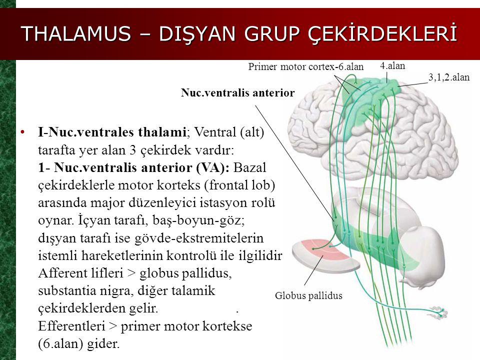 THALAMUS – DIŞYAN GRUP ÇEKİRDEKLERİ I-Nuc.ventrales thalami; Ventral (alt) tarafta yer alan 3 çekirdek vardır: 1- Nuc.ventralis anterior (VA): Bazal ç