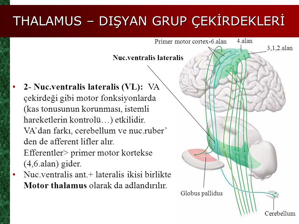 THALAMUS – DIŞYAN GRUP ÇEKİRDEKLERİ Globus pallidus Primer motor cortex-6.alan 4.alan 3,1,2.alan Nuc.ventralis lateralis 2- Nuc.ventralis lateralis (V