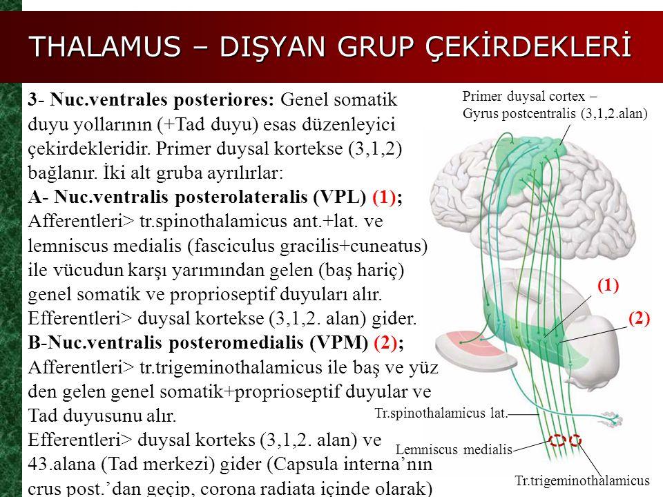 THALAMUS – DIŞYAN GRUP ÇEKİRDEKLERİ Tr.spinothalamicus lat. Primer duysal cortex – Gyrus postcentralis (3,1,2.alan) 3- Nuc.ventrales posteriores: Gene
