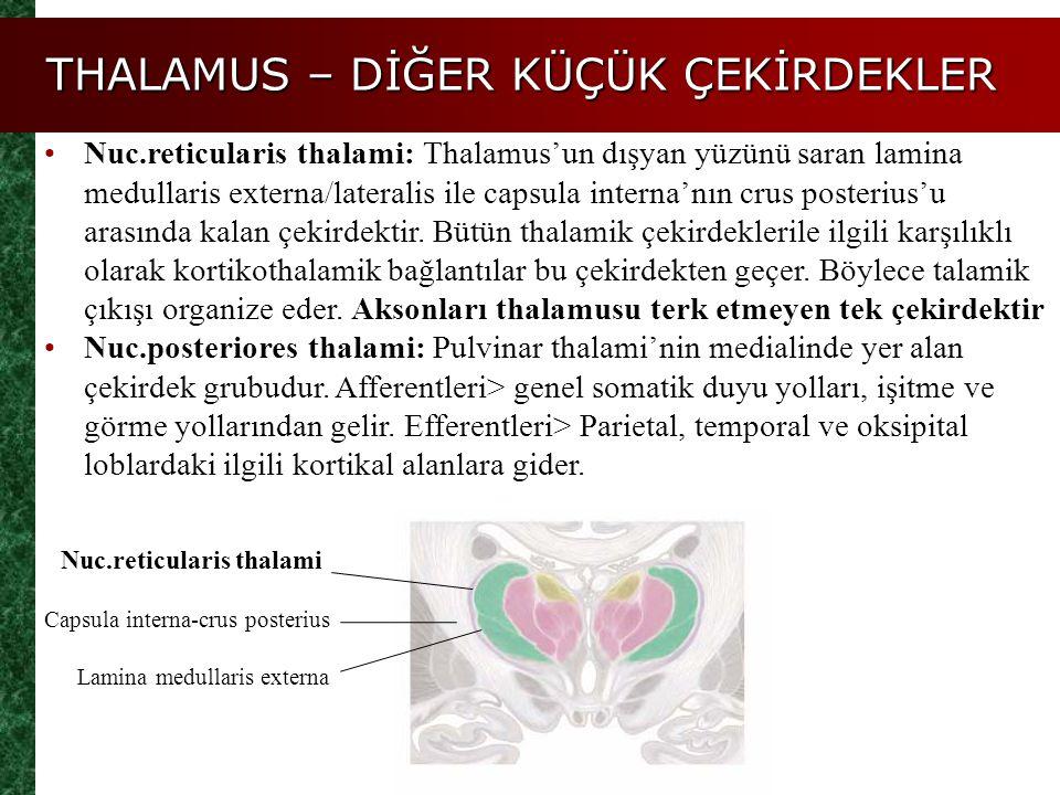 THALAMUS – DİĞER KÜÇÜK ÇEKİRDEKLER Nuc.reticularis thalami: Thalamus'un dışyan yüzünü saran lamina medullaris externa/lateralis ile capsula interna'nı