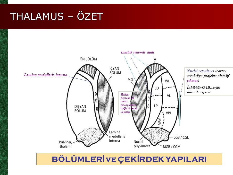 BÖLÜMLER İ ve ÇEK İ RDEK YAPILARI Lamina medullaris interna Limbik sistemle ilgili Nuclei retculares (cortex cerebri'ye projekte olan lif çıkmaz) İnhi