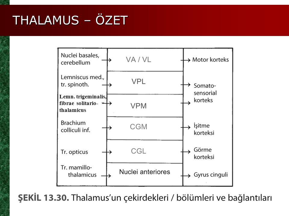THALAMUS – ÖZET Lemn. trigeminalis, fibrae solitario- thalamicus