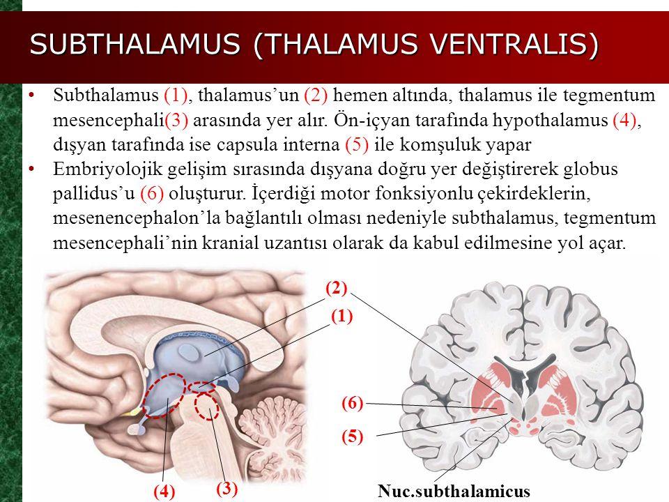 SUBTHALAMUS (THALAMUS VENTRALIS) Subthalamus (1), thalamus'un (2) hemen altında, thalamus ile tegmentum mesencephali(3) arasında yer alır. Ön-içyan ta
