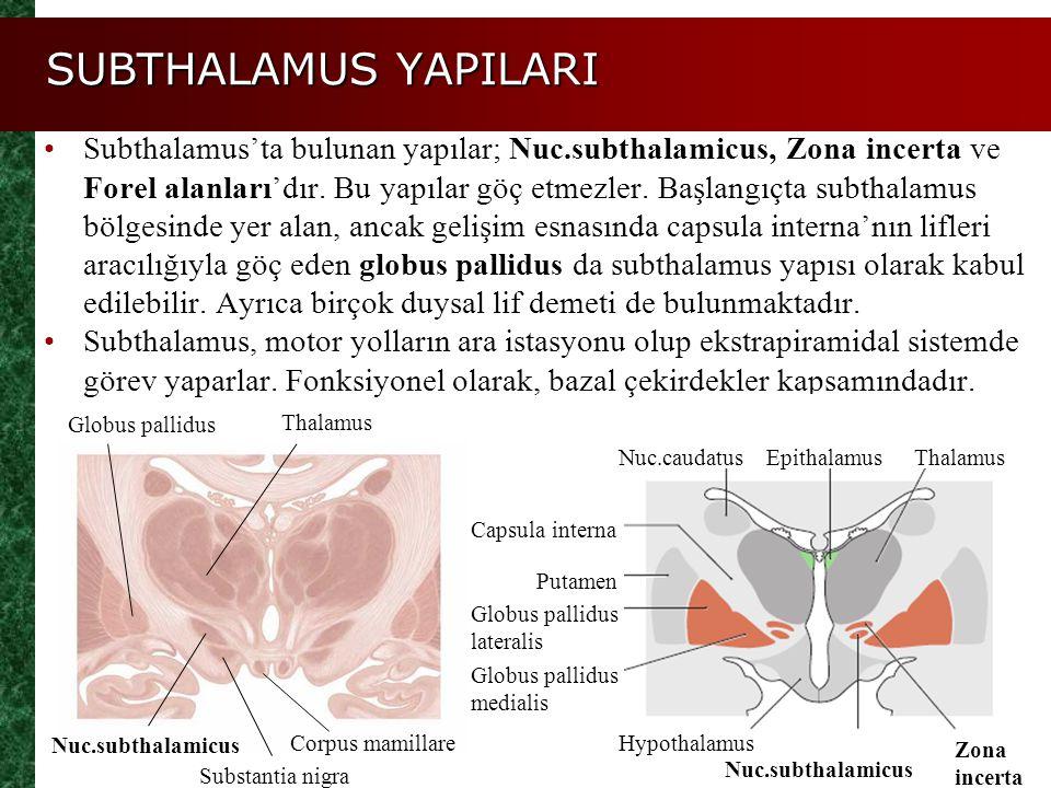 SUBTHALAMUS YAPILARI Subthalamus'ta bulunan yapılar; Nuc.subthalamicus, Zona incerta ve Forel alanları'dır. Bu yapılar göç etmezler. Başlangıçta subth