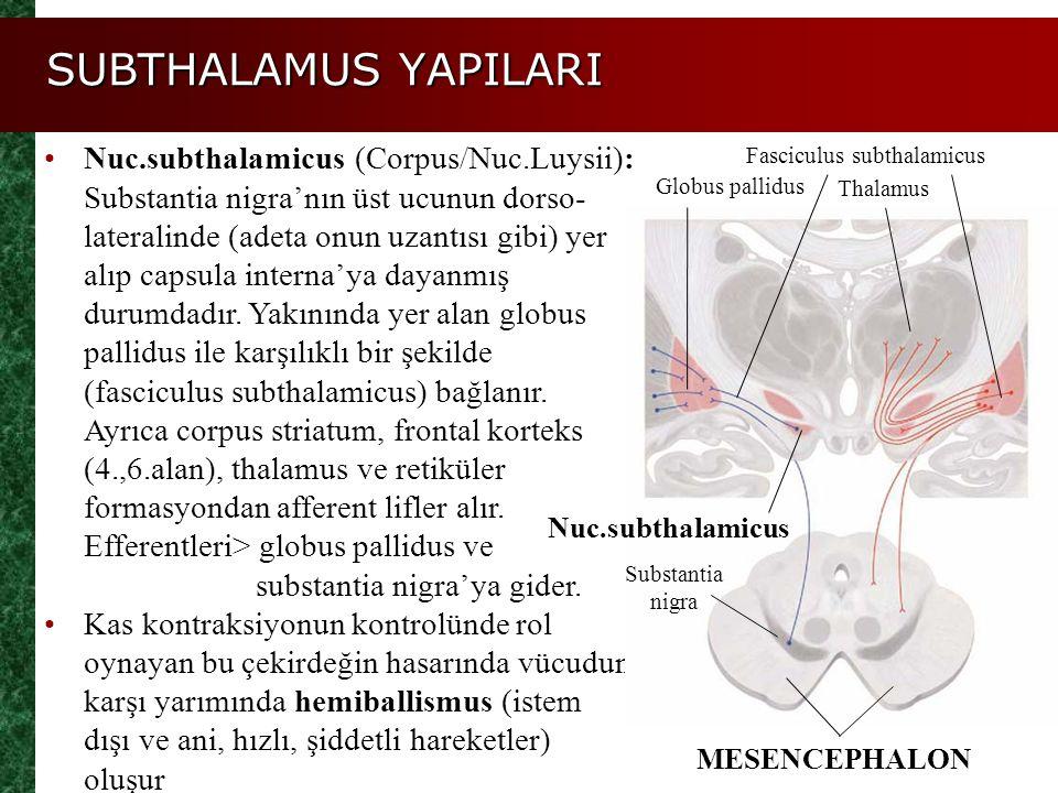 SUBTHALAMUS YAPILARI Nuc.subthalamicus (Corpus/Nuc.Luysii): Substantia nigra'nın üst ucunun dorso- lateralinde (adeta onun uzantısı gibi) yer alıp cap