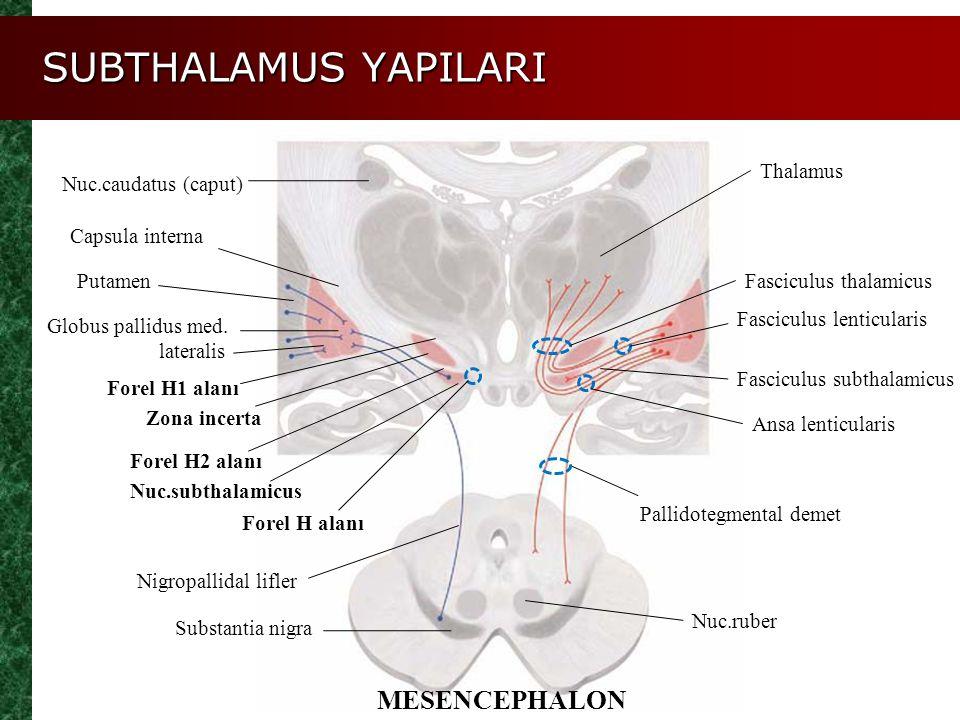 SUBTHALAMUS YAPILARI Thalamus Nuc.caudatus (caput) Capsula interna Putamen Zona incerta Nuc.subthalamicus Substantia nigra Globus pallidus med. latera