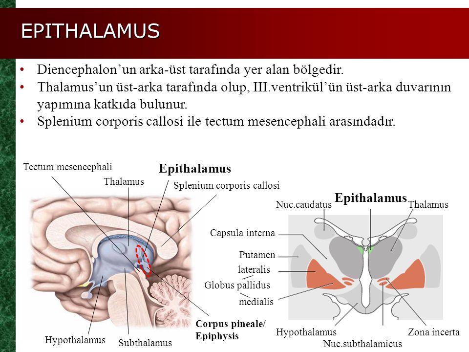 EPITHALAMUS Nuc.caudatus Epithalamus Thalamus Capsula interna Putamen Globus pallidus Hypothalamus Nuc.subthalamicus Zona incerta Thalamus Hypothalamu