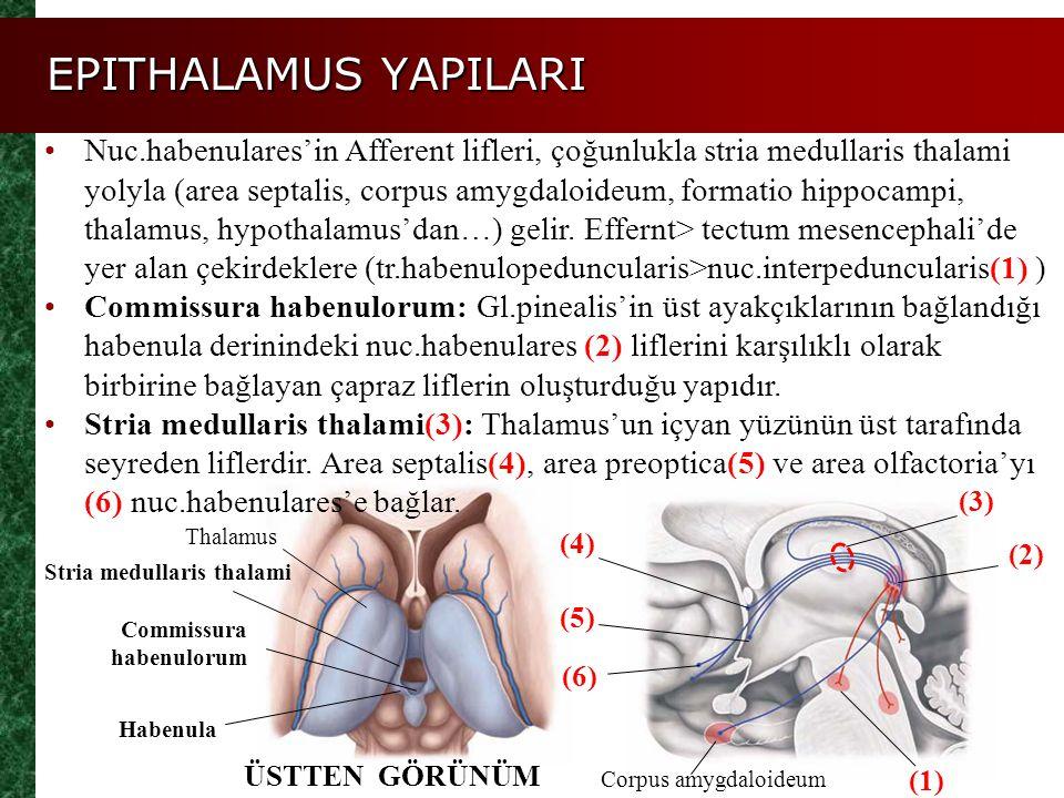EPITHALAMUS YAPILARI Nuc.habenulares'in Afferent lifleri, çoğunlukla stria medullaris thalami yolyla (area septalis, corpus amygdaloideum, formatio hi