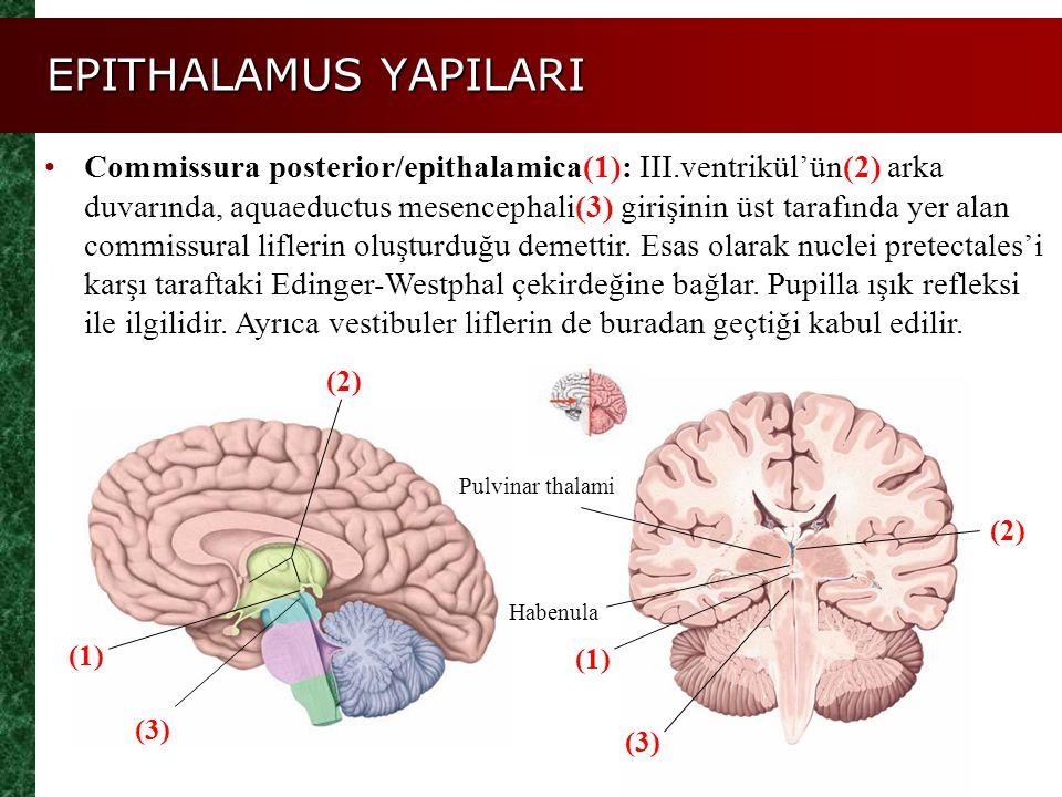 EPITHALAMUS YAPILARI Commissura posterior/epithalamica(1): III.ventrikül'ün(2) arka duvarında, aquaeductus mesencephali(3) girişinin üst tarafında yer