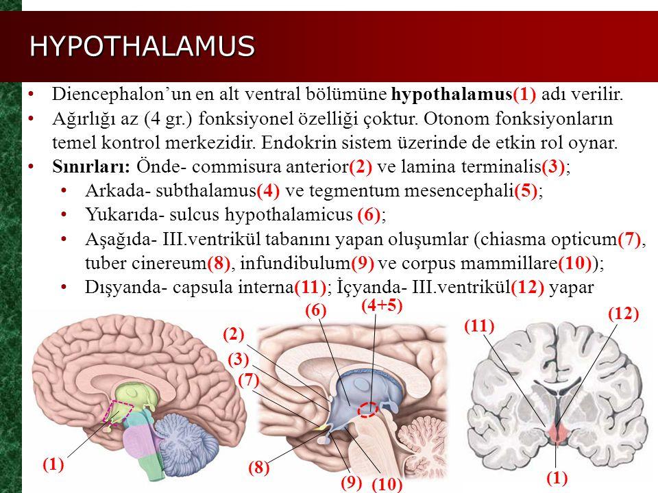 HYPOTHALAMUS Diencephalon'un en alt ventral bölümüne hypothalamus(1) adı verilir. Ağırlığı az (4 gr.) fonksiyonel özelliği çoktur. Otonom fonksiyonlar