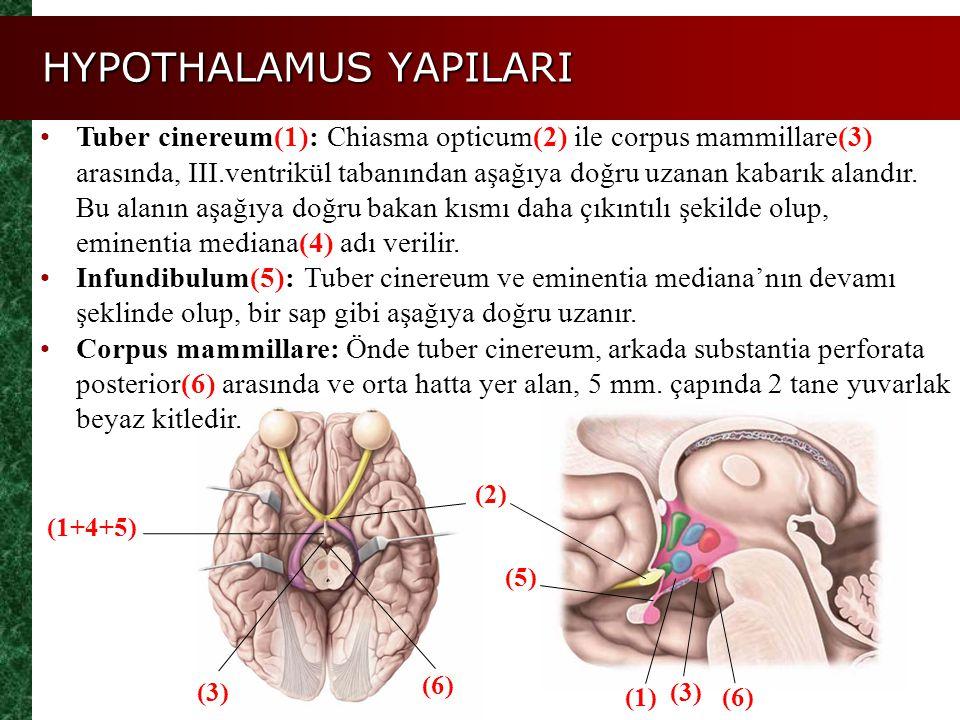 HYPOTHALAMUS YAPILARI (1+4+5) Tuber cinereum(1): Chiasma opticum(2) ile corpus mammillare(3) arasında, III.ventrikül tabanından aşağıya doğru uzanan k