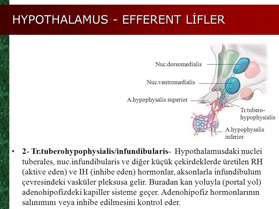 HYPOTHALAMUS - EFFERENT LİFLER 2- Tr.tuberohypophysialis/infundibularis- Hypothalamusdaki nuclei tuberales, nuc.infundibularis ve diğer küçük çekirdek