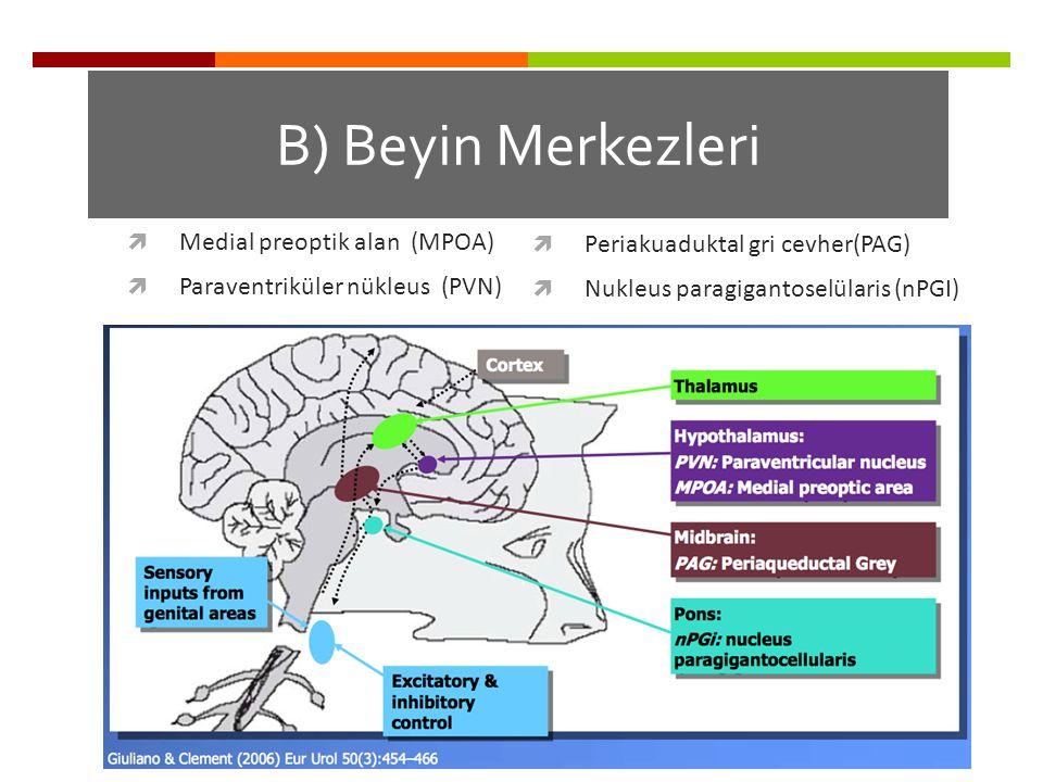 B) Beyin Merkezleri  Medial preoptik alan (MPOA)  Paraventriküler nükleus (PVN)  Periakuaduktal gri cevher(PAG)  Nukleus paragigantoselülaris (nPG