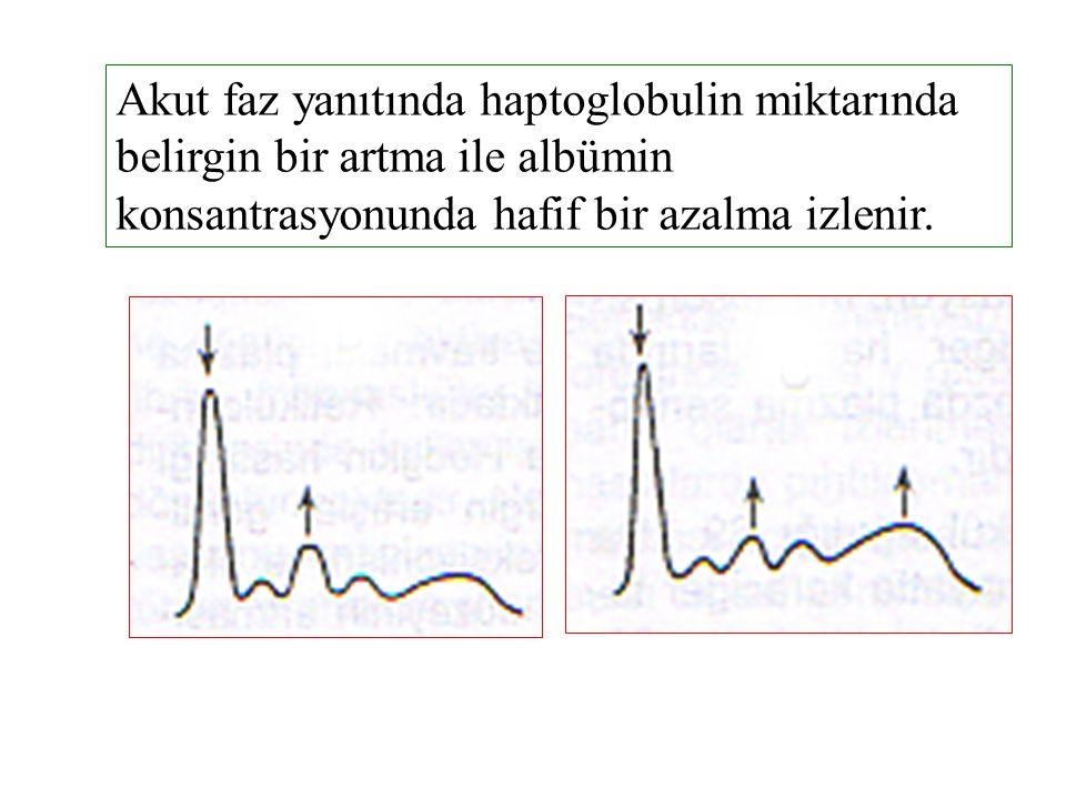 Akut faz yanıtında haptoglobulin miktarında belirgin bir artma ile albümin konsantrasyonunda hafif bir azalma izlenir.