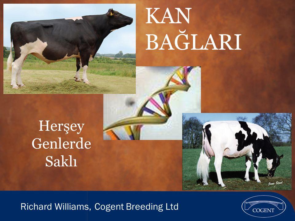 Holstein Irkı  Kökeni yaklaşık 2000 sene önce Kuzey Hollanda ve Almanya'ya dayanır  1850 lerde ilk ithalat Amerika'ya yapıldı  1881 de ilk inekler Kanada'ya getirildi.Günümüz Kanada sığır nüfusunun %99'u 2 ineğe dayanır.