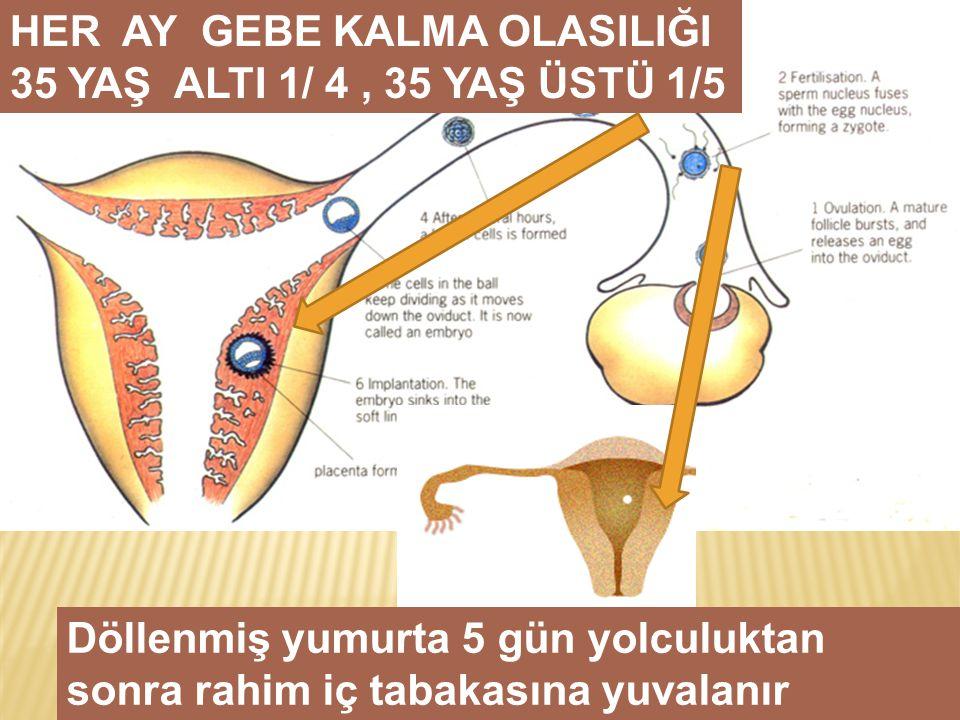 HER AY GEBE KALMA OLASILIĞI 35 YAŞ ALTI 1/ 4, 35 YAŞ ÜSTÜ 1/5 Döllenmiş yumurta 5 gün yolculuktan sonra rahim iç tabakasına yuvalanır