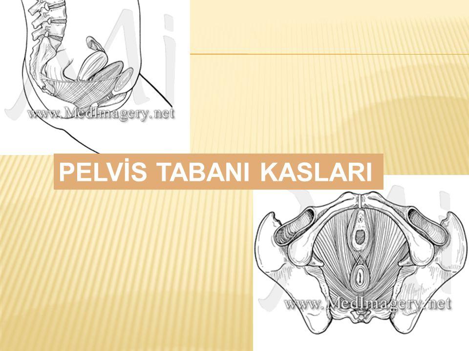 PELVİS TABANI KASLARI