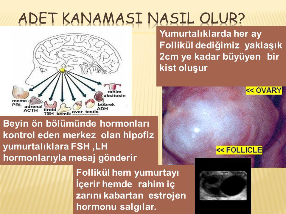  Yumurtalıktan östrojen ve progesteron hormonları salgılanır.