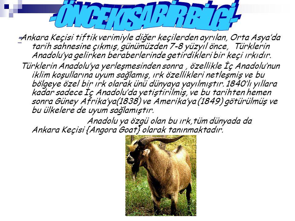 - Ankara Keçisi tiftik verimiyle diğer keçilerden ayrılan, Orta Asya'da tarih sahnesine çıkmış, günümüzden 7-8 yüzyıl önce, Türklerin Anadolu'ya gelir