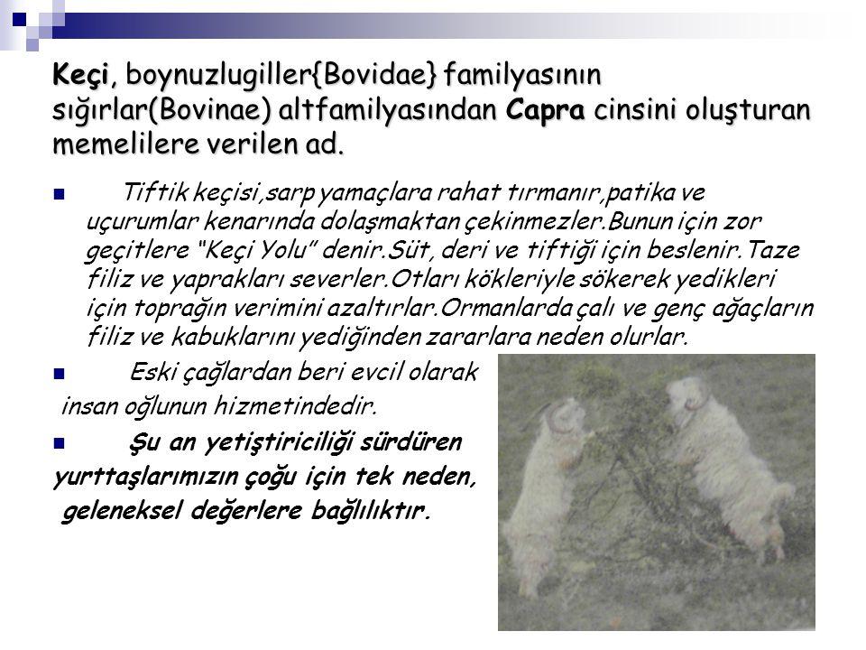 Keçi, boynuzlugiller{Bovidae} familyasının sığırlar(Bovinae) altfamilyasından Capra cinsini oluşturan memelilere verilen ad. Tiftik keçisi,sarp yamaçl