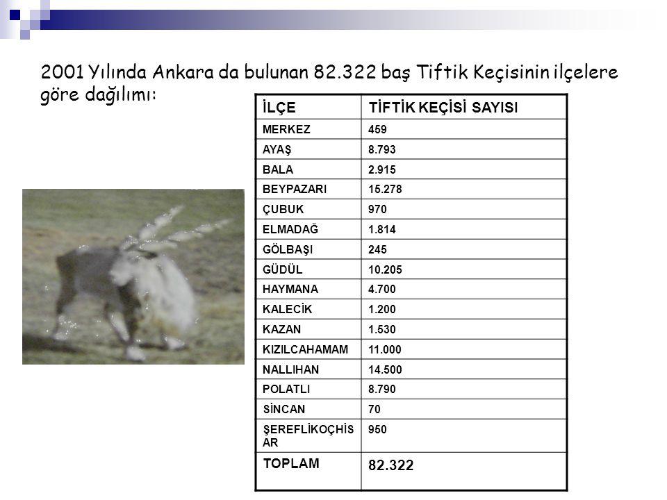 2001 Yılında Ankara da bulunan 82.322 baş Tiftik Keçisinin ilçelere göre dağılımı: İLÇETİFTİK KEÇİSİ SAYISI MERKEZ459 AYAŞ8.793 BALA2.915 BEYPAZARI15.