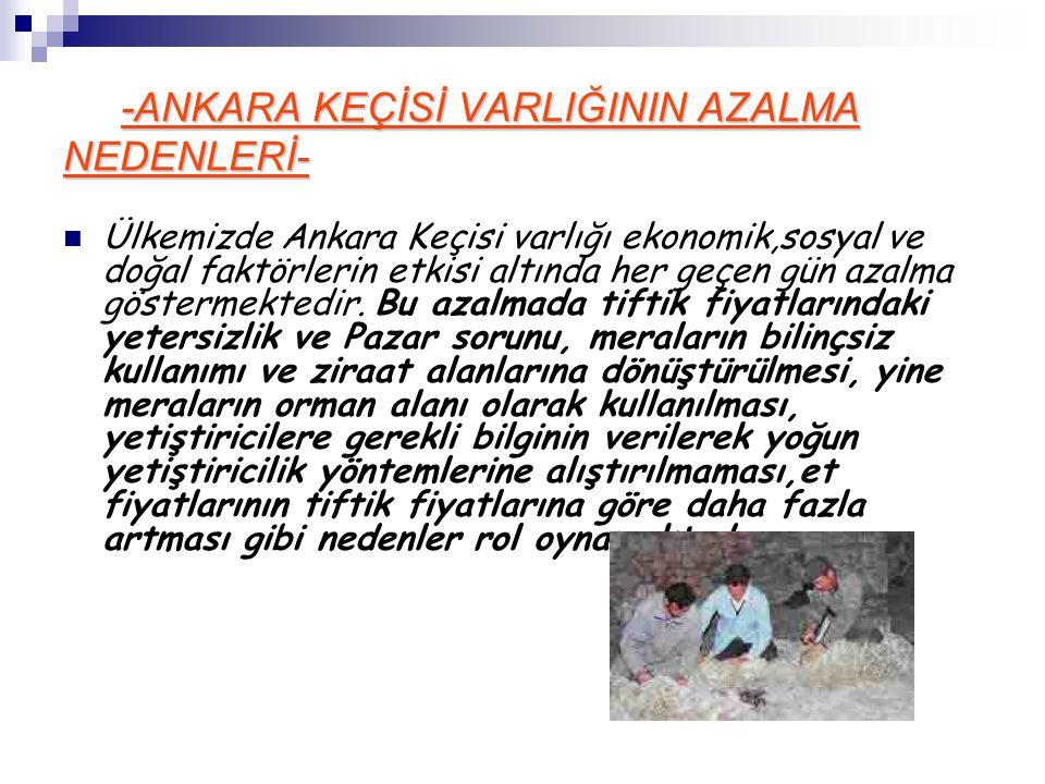 -ANKARA KEÇİSİ VARLIĞININ AZALMA NEDENLERİ- Ülkemizde Ankara Keçisi varlığı ekonomik,sosyal ve doğal faktörlerin etkisi altında her geçen gün azalma g