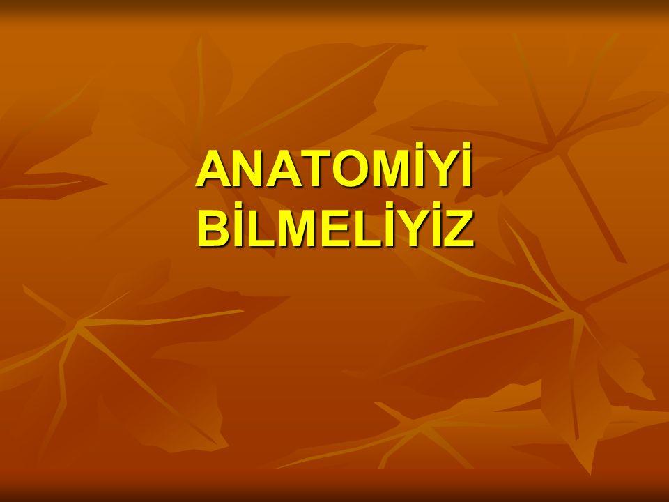 Hemoroidal pleksuslar İç Hemoroidal Pleksus İç Hemoroidal Pleksus (korpus kavernosum hemoroidalis) Dış Hemoroidal Pleksus Dış Hemoroidal Pleksus 4 Treitz Ligamenti Parks ligamenti