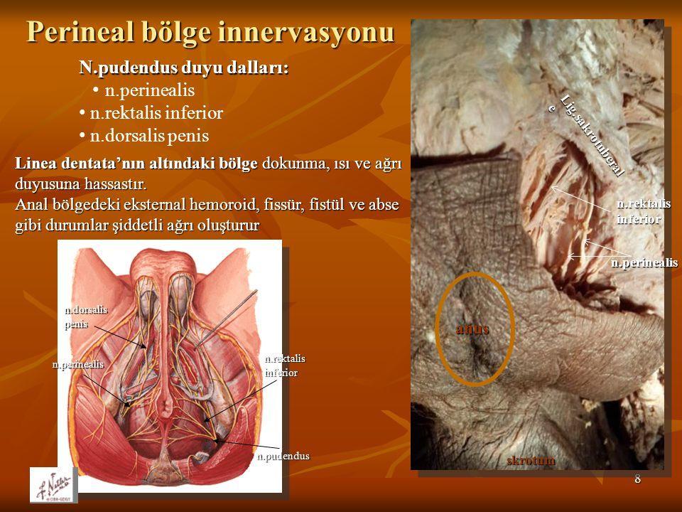 8 n.pudendus n.perinealis n.rektalis inferior n.dorsalis penis Lig.sakrotuberal e n.rektalis inferior n.perinealis anus skrotum Perineal bölge innervasyonu N.pudendus duyu dalları: n.perinealis n.rektalis inferior n.dorsalis penis Linea dentata'nın altındaki bölge dokunma, ısı ve ağrı duyusuna hassastır.