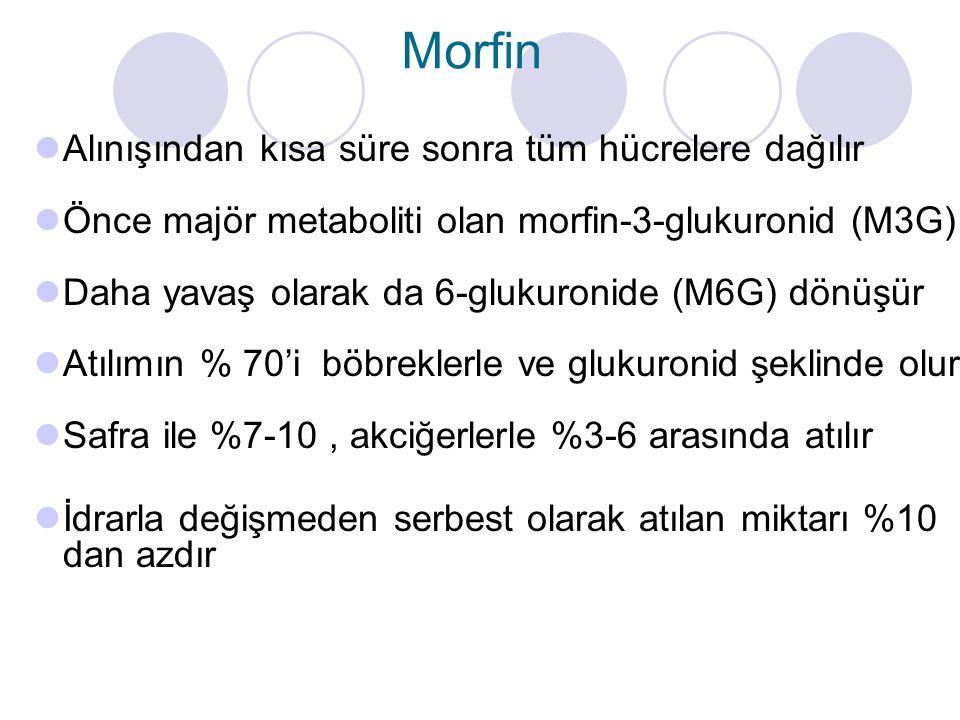 Alınışından kısa süre sonra tüm hücrelere dağılır Önce majör metaboliti olan morfin-3-glukuronid (M3G) Daha yavaş olarak da 6-glukuronide (M6G) dönüşür Atılımın % 70'i böbreklerle ve glukuronid şeklinde olur Safra ile %7-10, akciğerlerle %3-6 arasında atılır İdrarla değişmeden serbest olarak atılan miktarı %10 dan azdır Morfin