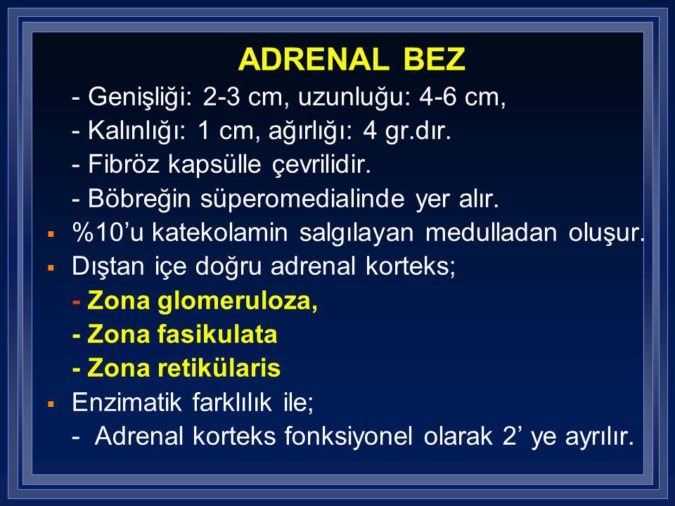 ADRENAL BEZ - Genişliği: 2-3 cm, uzunluğu: 4-6 cm, - Kalınlığı: 1 cm, ağırlığı: 4 gr.dır. - Fibröz kapsülle çevrilidir. - Böbreğin süperomedialinde ye