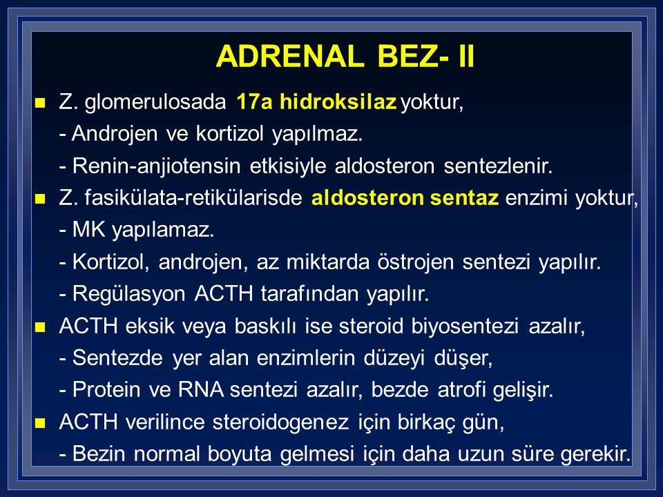 ADRENAL BEZ- II Z. glomerulosada 17a hidroksilaz yoktur, - Androjen ve kortizol yapılmaz. - Renin-anjiotensin etkisiyle aldosteron sentezlenir. n Z. f