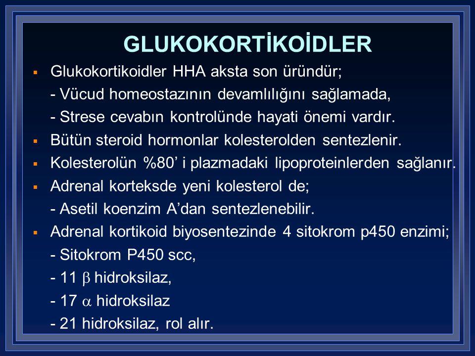 GLUKOKORTİKOİDLER  Glukokortikoidler HHA aksta son üründür; - Vücud homeostazının devamlılığını sağlamada, - Strese cevabın kontrolünde hayati önemi